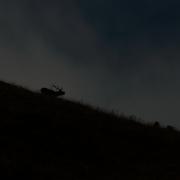 Cerf élaphe PN Abruzzes