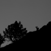 Mouflon du matin